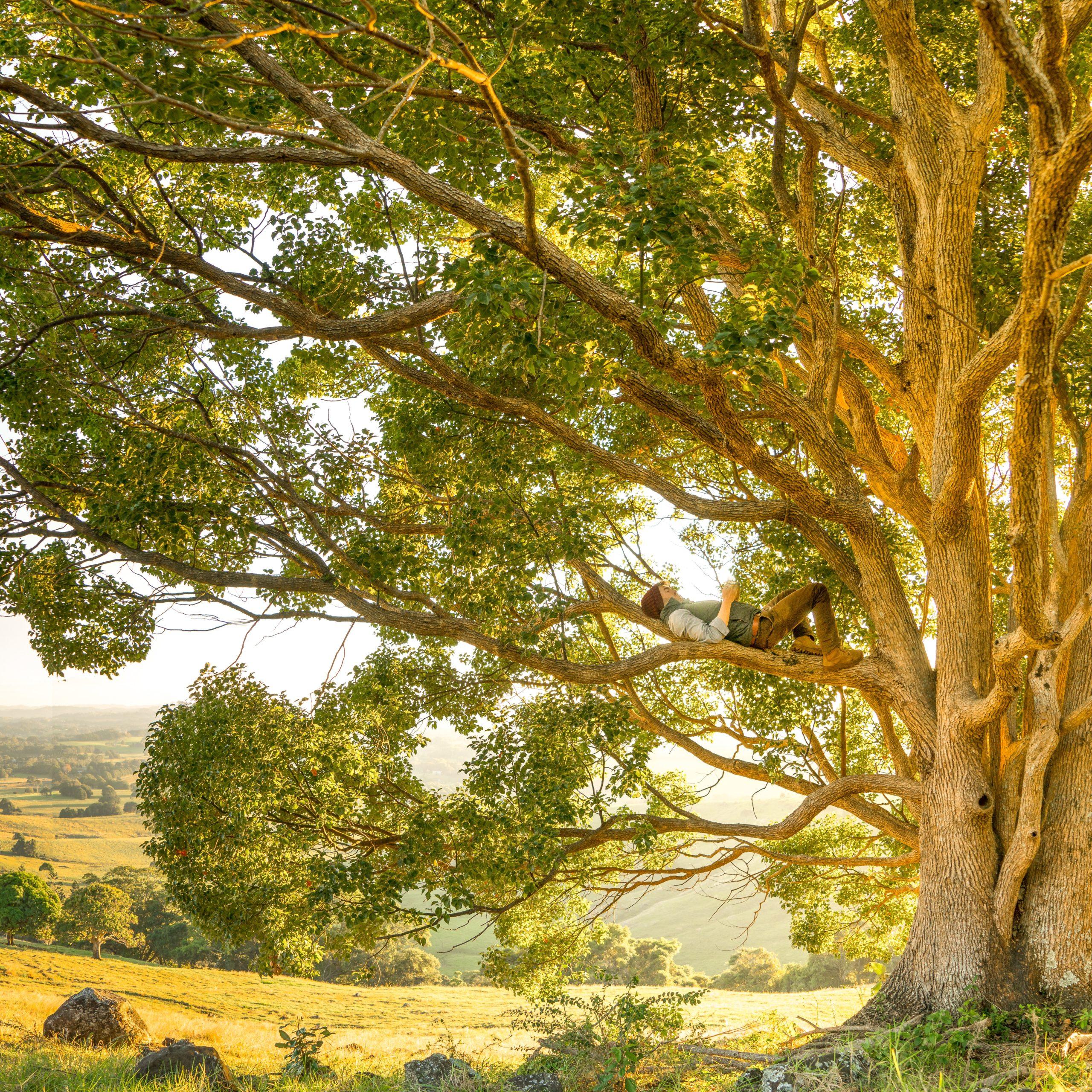 Liegender Mann im Baum