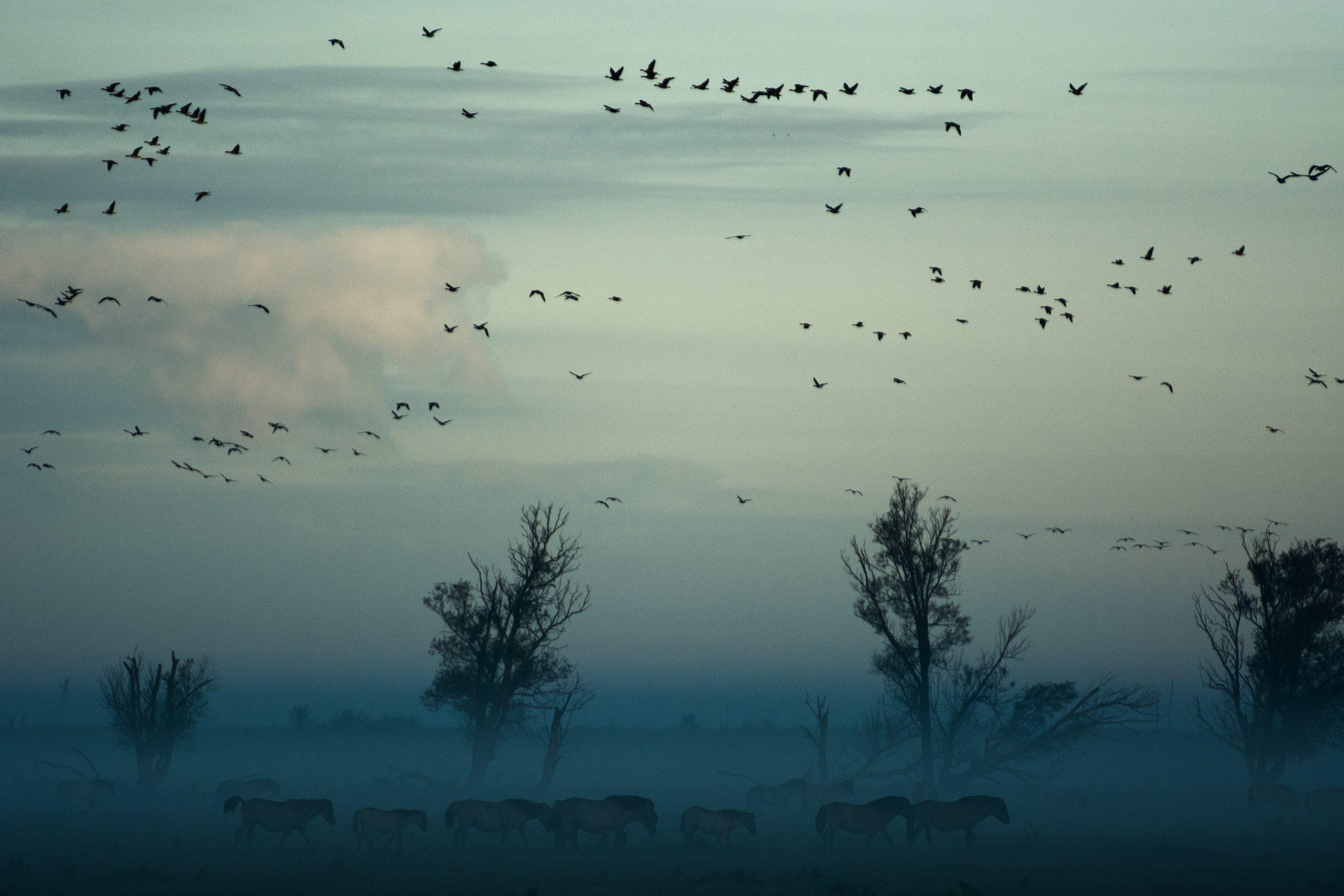 Auffliegende Vögel im Dunst